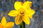 spring-3952265_640