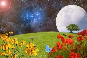 meadow-2401931_640 (2)